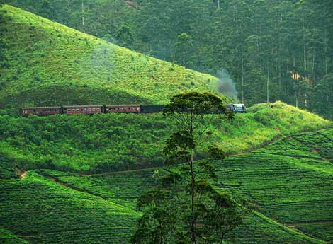 Train journey in the hill country of Sri Lanka